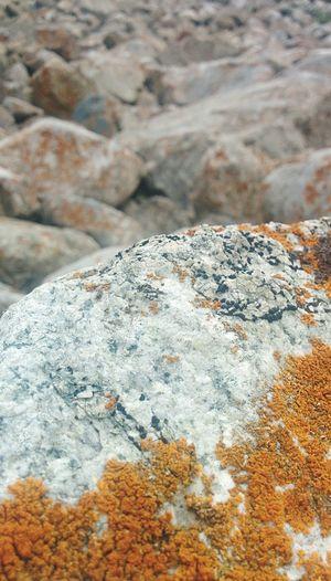 Surface. Rock Nature Close