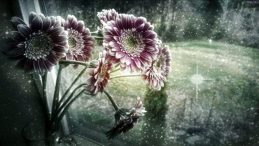 Spacies... Flower Collection Spring Flowers Flower Power Flower Porn Urban Nature Mystic Mystical Particles Flowerpower