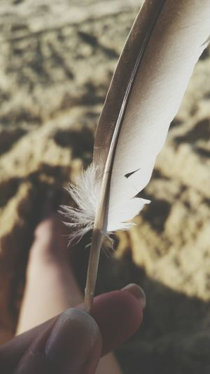 Feathers Feather  Feather_perfection Birds