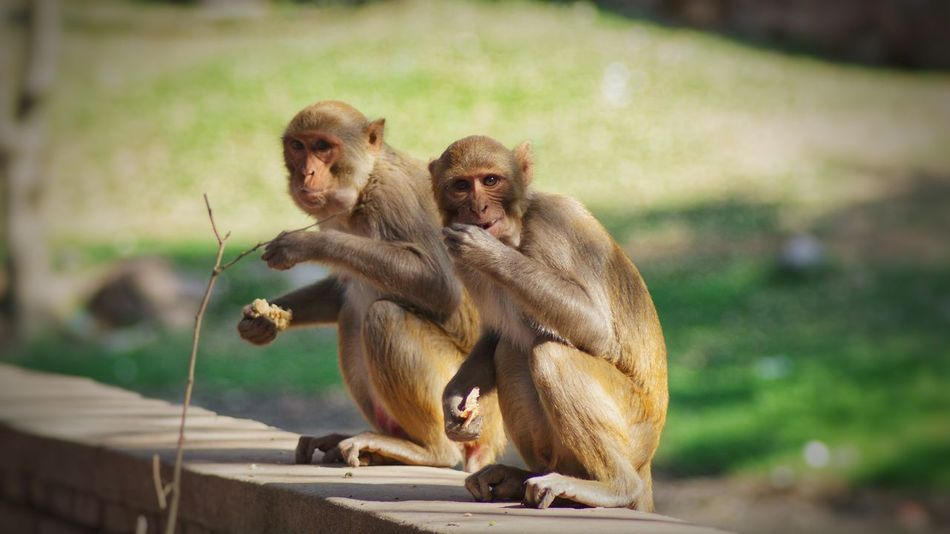 Care Monkey Bonding Sitting Animal Family Togetherness Mammal Holding Love Primate Affectionate Embracing Focus On Foreground Animal Themes Young Animal Animals In The Wild Outdoors Animal Wildlife No People Nature Animal Photography EyeEmNewHere India Wildlife & Nature Wildlife Photography