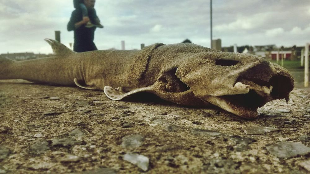 Another picture of the fish I found today. Turns out it's a lesser spotted dogfish.