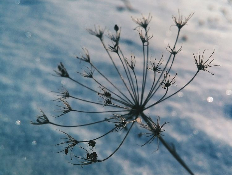 Taking Photos Nature Macro Macro Photography Macro Nature Beautiful Nature Nature Photography Simply Beautiful Nature_collection Beautifulnature Macro_collection Simple Moment Blue Snow Winter Wintertime Winter_collection Drygrass Overtone