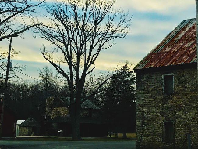 Tree Farm House Country Bare Tree Sky Backroads