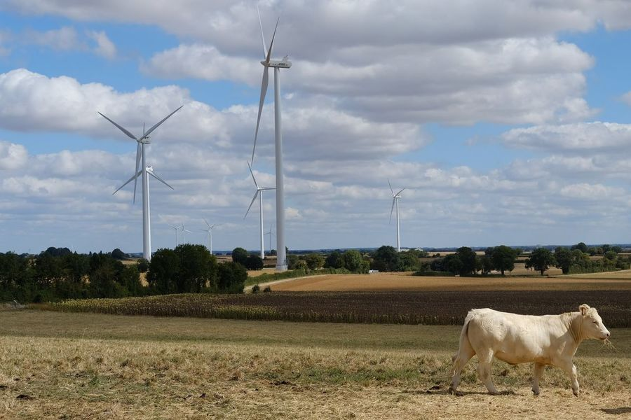 Tree Electricity Pylon Power Station Wind Turbine Electricity  Fuel And Power Generation Rural Scene Technology Power Supply Business Finance And Industry Renewable Energy Industrial Windmill Alternative Energy Turbine