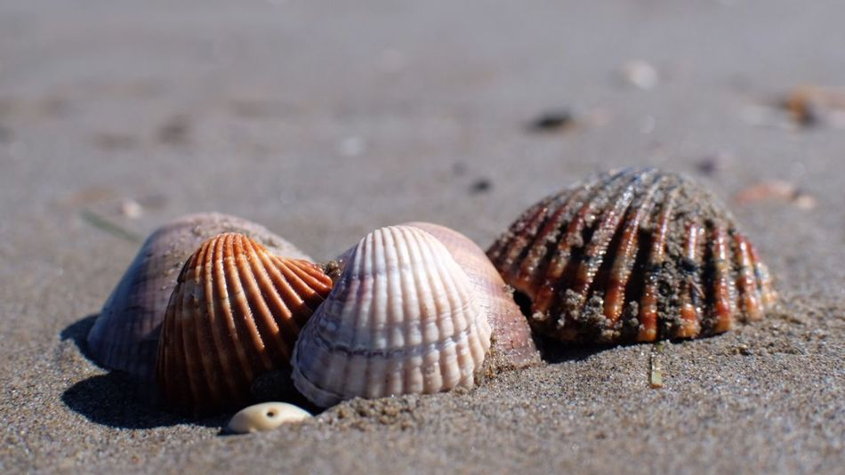 EyeEm Selects Animal Wildlife Beach Animal Shell Land Animals In The Wild Sand Focus On Foreground Sea Sunlight Beauty In Nature No People Close-up Animal Themes Seashell Outdoors Animal Shell Day Water Nature