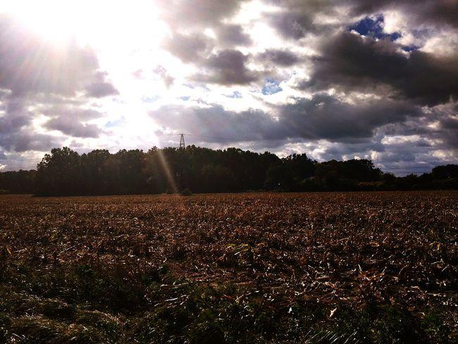 Cloud - Sky Field Beauty In Nature Landscape No People Day Sky The Week On EyeEm Autumn Leaves Autumn Colors Autumn🍁🍁🍁 Corn Field Fields Fields And Sky Dry Corn Dry Field Corn Fields Trees Trees And Sky EyeEmNewHere Outdoors Nature Tree Field Sunlight