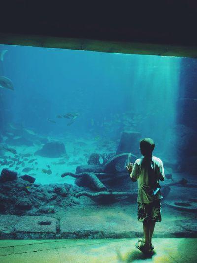 Child Aquarium Amazement And Wonderment