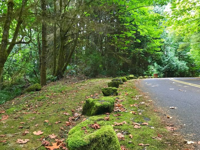 Moss-covered stones along a road in a lush green forest Moss Tree The Way Forward Road Nature Tranquility Growth Tranquil Scene Winding Road Landscape Grass Transportation Plant Beauty In Nature No People Day Scenics Forest Footpath Green Color Outdoors