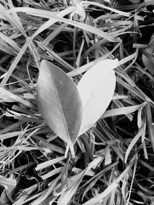 Leaf Nature No People Close-up Fragility Plant Grass Beauty In Nature Outdoors Day