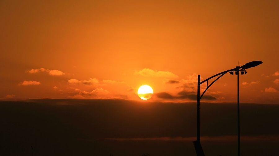 Silhouette of tree against orange sky