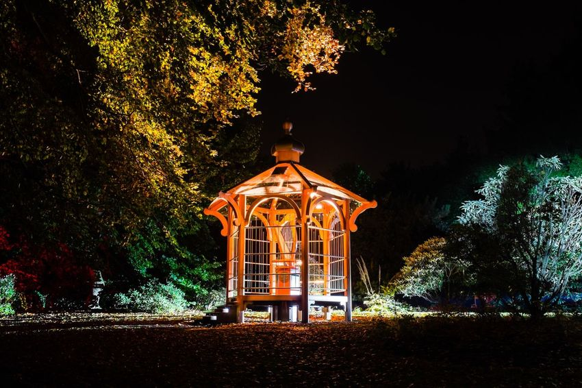 Another shot from the Botanics Lights in Edinburgh. Edinburgh Eyeem Scotland  Garden Night Night Lights Nightphotography Fuji X100s Fujifilm_xseries EyeEm Best Shots Art