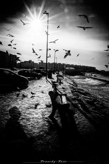The birds Black And White Art Franckyfoto Streetphoto_bw Hitchcock Plage