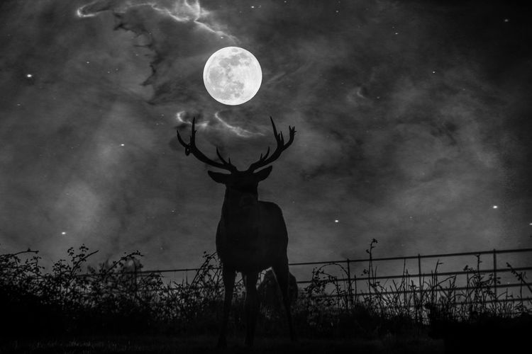 EyeEm Best Shots EyeEm Nature Lover EyeEmBestPics EyeEm Best Shots - Nature Beauty In Nature Edit Junkie Artistic Expression Stag Astronomy Moon Space Sky Grass Moonlight Antler Deer Full Moon Star Field