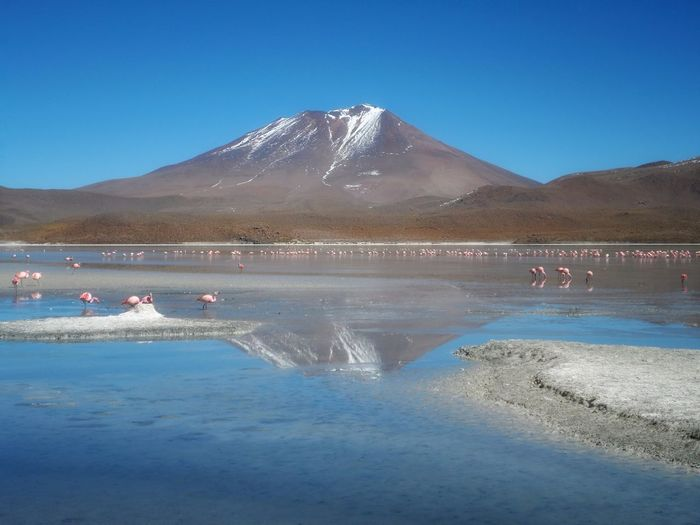 Bolivia Flamingo Water Mountain Reflection Blue Beach Lake Nature Clear Sky Landscape Beauty In Nature