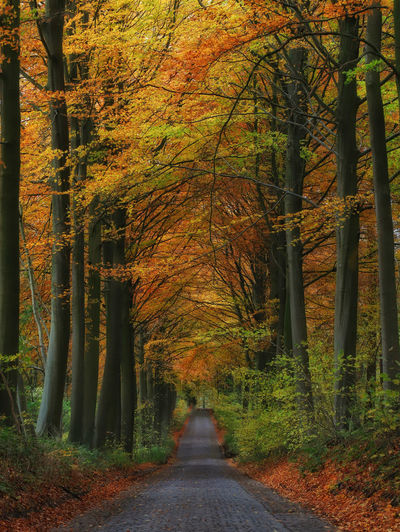 Fall colors Nature Nature Photography Nature_collection Tree_collection  No People Mood Colors Fine Art Photography Beauty In Nature Belgium Tree Forest Yellow Orange Color Road Season  Autumn Leaf Woods WoodLand Fall Tree Trunk Pathway Empty Road