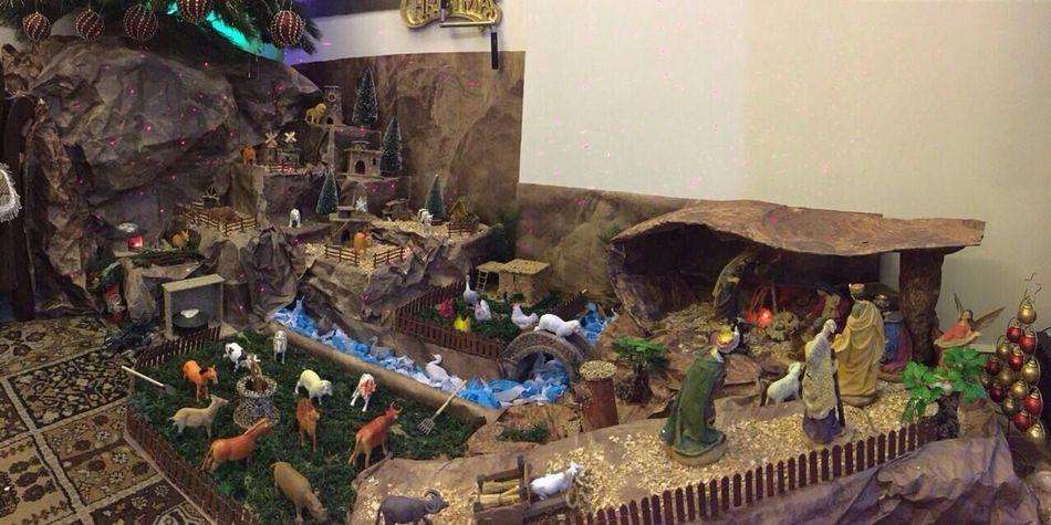 Christmas Christmas Tree Taking Photos Christmas Time Chritmas Grotto