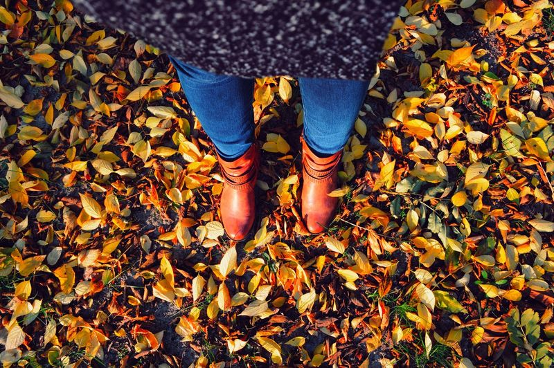 Low Section Of Woman Standing On Yellow Leaves