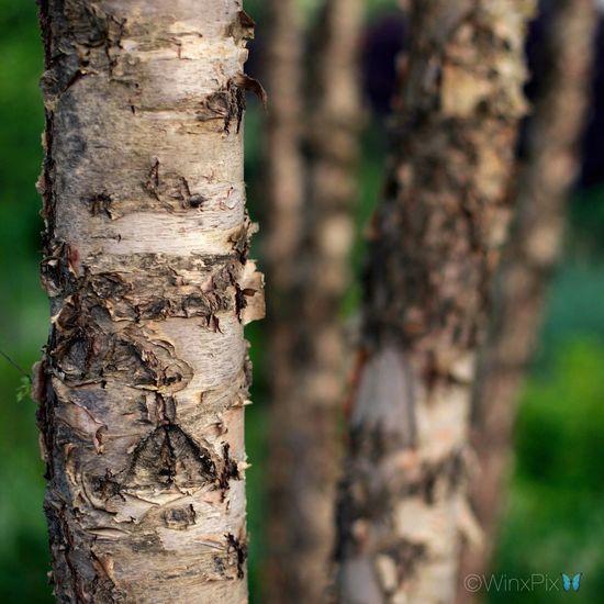 Tree bark. Tree Bark Tree Bark Texture Tree Bark Patterns Tree Bark Close Up Tree Bark Colors Tree Bark On Focus Nature Nature_collection Nature Photography Naturelovers Nature_perfection Naturephotography