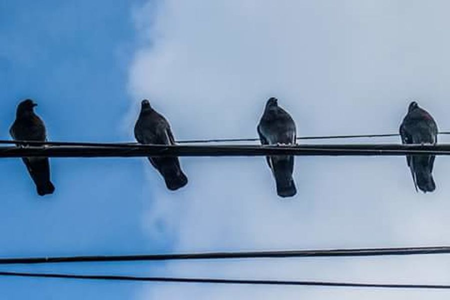 Low Angle View Bird Animal Themes Perching Animals In The Wild Wildlife Two Animals Three Animals Blue Sky Day Cable Cloud Nature Zoology Tranquility
