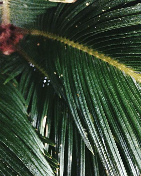 Green Color Palm Tree Palm Nature Nature Photography Simple Photography Plant Flowers Herbarium Botany Collection Beauty In Nature Grass