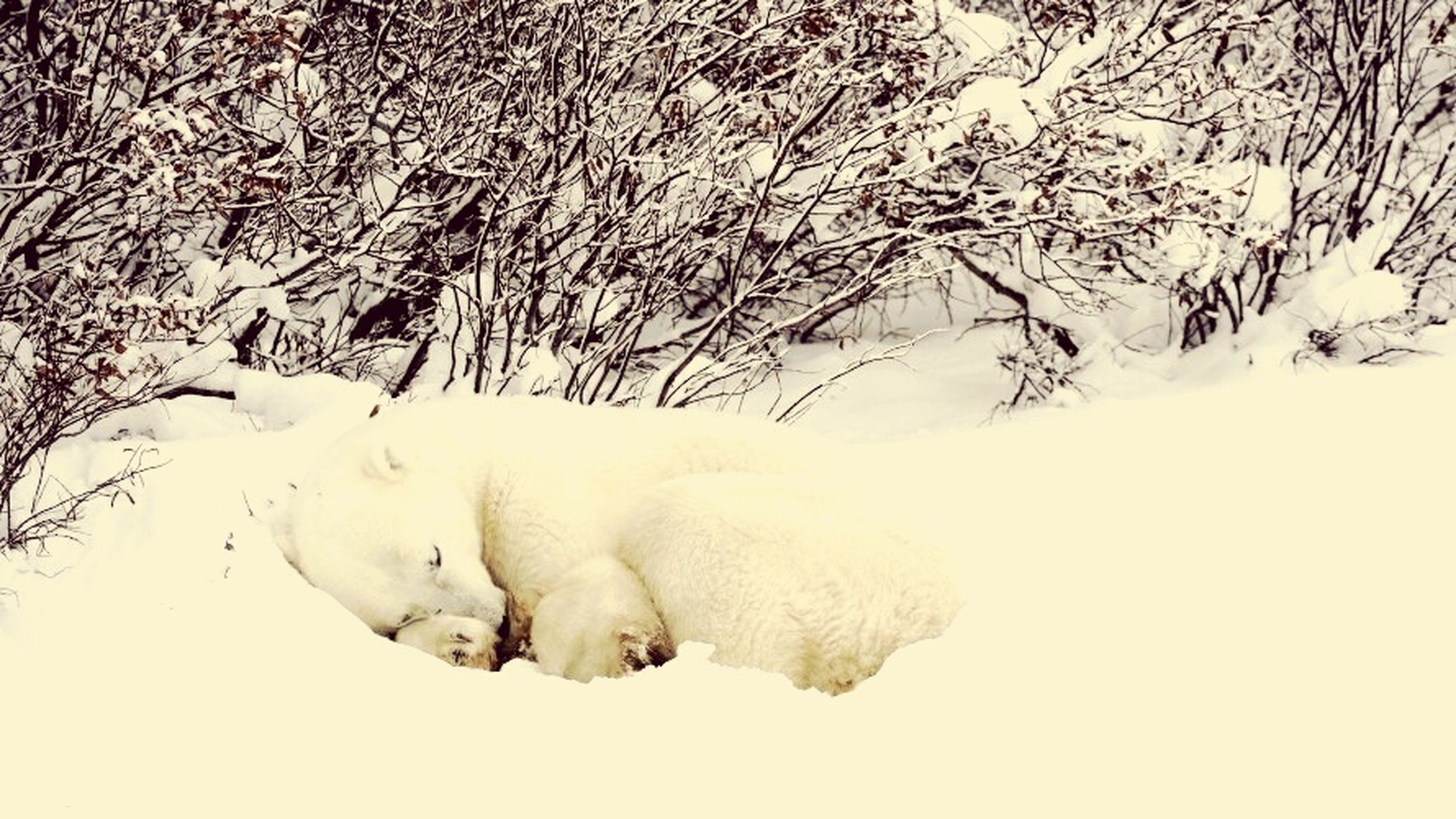 snow, winter, cold temperature, nature, no people, field, animal themes, frozen, outdoors, mammal, day, close-up