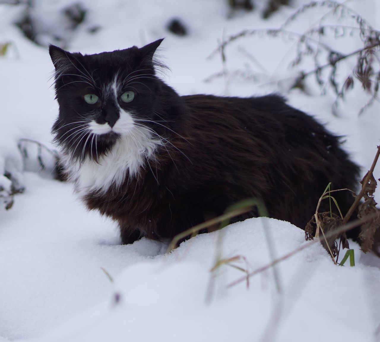 Black Cat On Snow Covered Field
