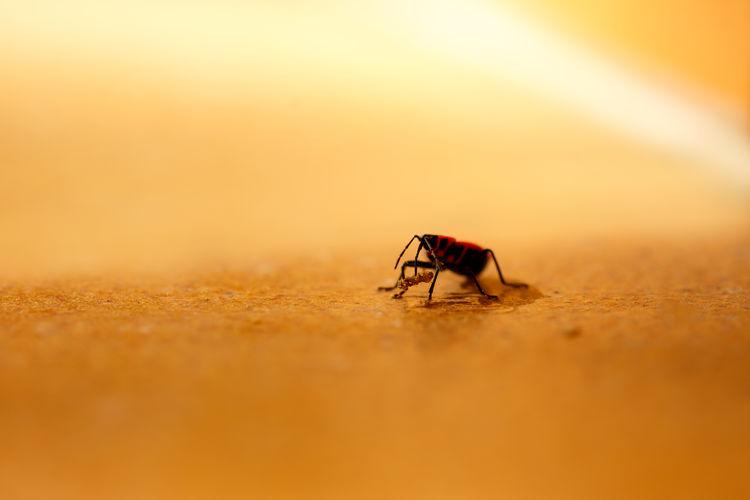Close-up of fly on orange sunset