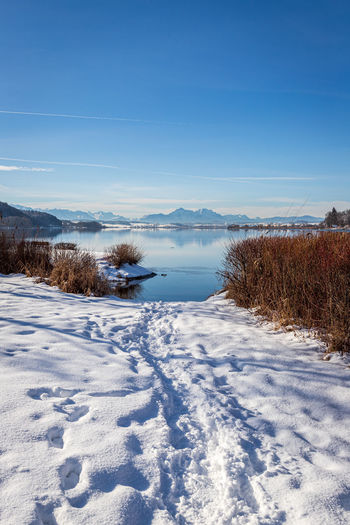 Beautiful winter nature at the lake wallersee, austria