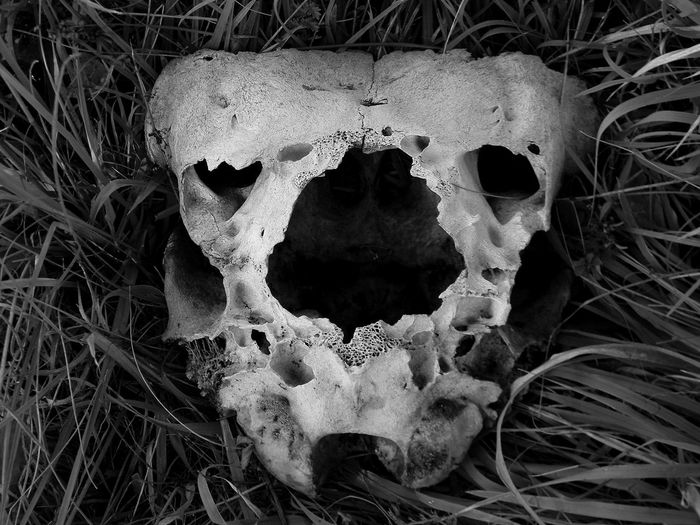 Animal Animal Head  Beauty In Nature Black And White Blackandwhite Close-up Day Death Dirty Field Focus On Foreground Fungus Grass Grassy Ground Growth Melancholic Landscapes Nature No People Outdoors Plant Selective Focus Skull The End Tranquility