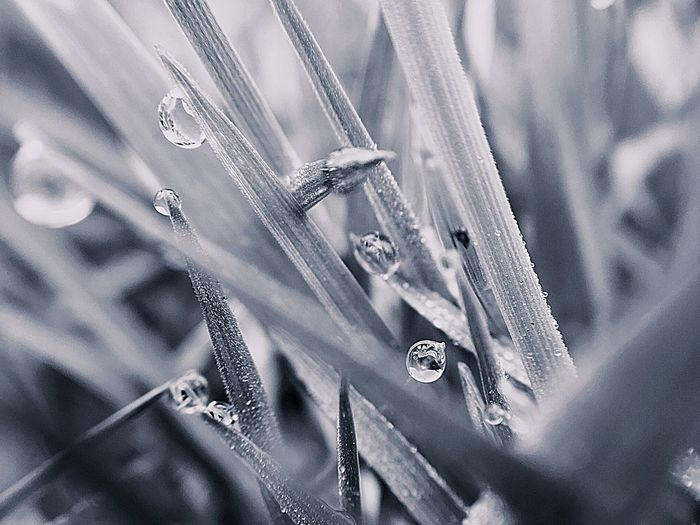 Close-up of icicles on plant