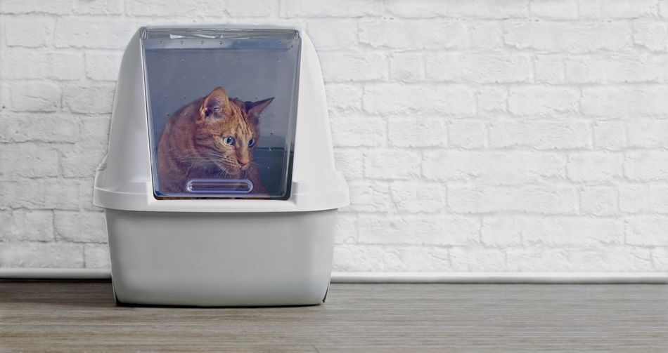 Ginger cat in a