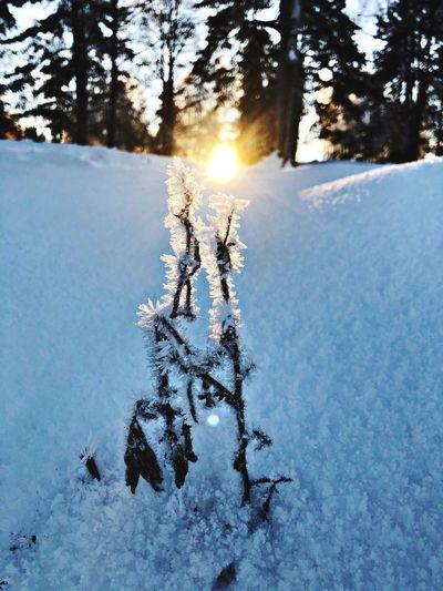 Ice sun Oslo