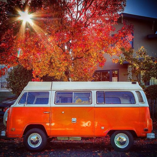 Land Vehicle Mode Of Transport Transportation Tree Car Stationary Parking Sunbeam Street Sunlight Lens Flare Parked Growth Day Branch City Life Outdoors Nature Sun In Front Of