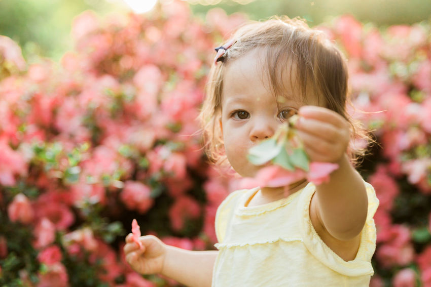 Little Girl Holding Pink Flower Pink Childhood Close-up Cute Day Flower Flower Head Focus On Foreground Fragility Freshness Front View Girls Growth Innocence Leisure Activity Lifestyles Looking At Camera Nature One Person Outdoors People Plant Portrait Real People Smell