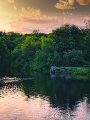 Tree Plant Water Beauty In Nature Scenics - Nature Sky Tranquility Non-urban Scene No People Idyllic Cloud - Sky Growth Nature Reflection Waterfront Green Color Lake Outdoors Tranquil Scene