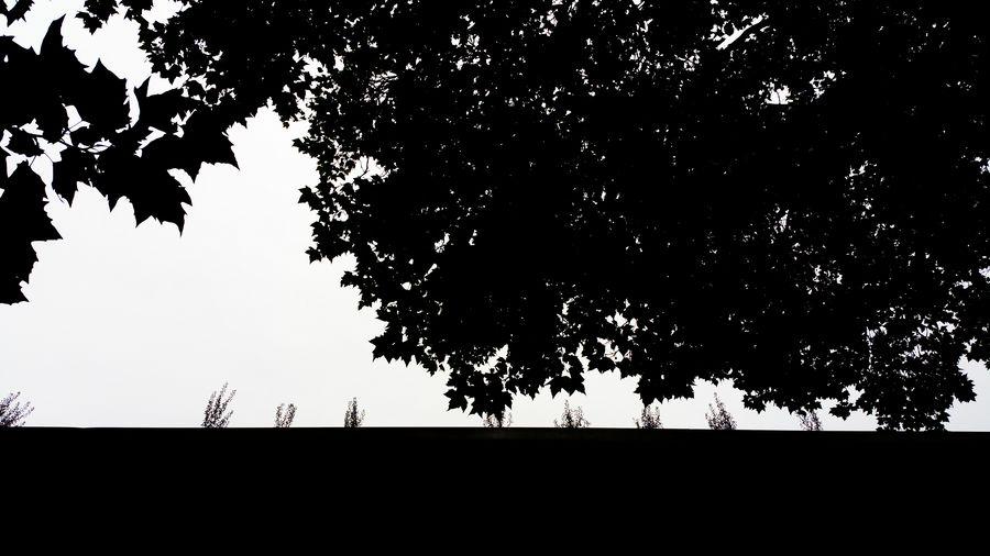 urban nature (black & white) Beautiful Nature Beauty In Nature Beauty In Ordinary Things Beauty Redefined Black & White Black And White Black And White Collection  Black And White Photography Black&white Blackandwhite Blackandwhite Photography Blackandwhitephotography Branch Foliage Leafage Leaves Leaves_collection Leaves🌿 No People Outline Scenics Silhouette Silhouette Silhouettes Tree