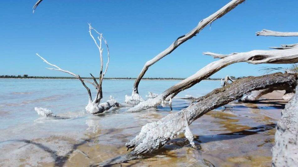 Water Sea Nature Scenics Tree Horizon Over Water Outdoors Day Beach Sky No People