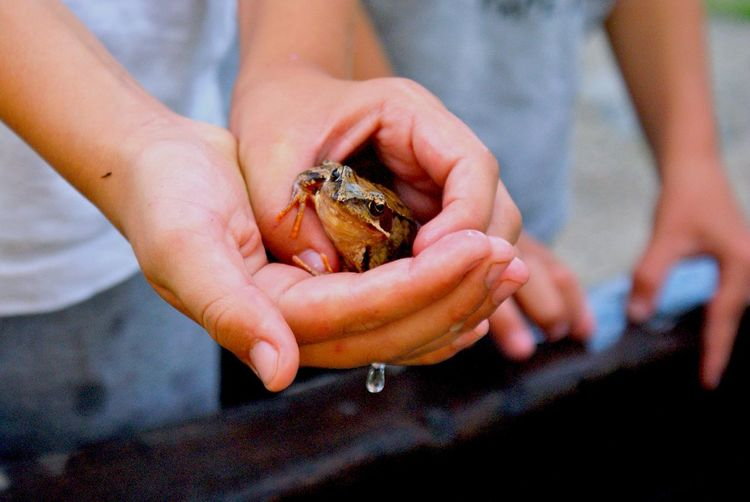 Frog in the childrens hand Children Nature Frog Wet Playing With The Animals Summer Summer Views Macro Beauty Youth Of Today Place Of Heart This Is Family Summer Exploratorium