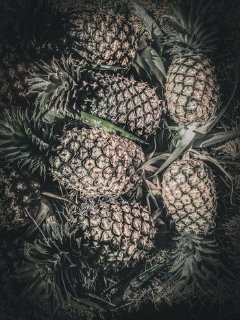 Pineapple Food And Drink Healthy Eating Green Color Pine Cone Backgrounds Large Group Of Objects Nature No People Fruit Food Freshness Wellbeing Tropical Fruit Close-up Day Full Frame Plant Natural Pattern Abundance Lychee Coniferous Tree