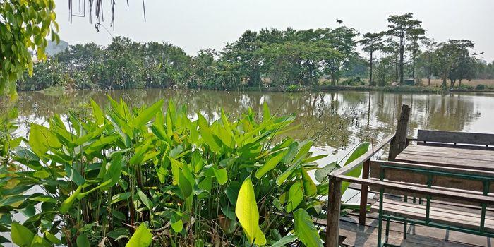 Water Tree Lake Sky Plant