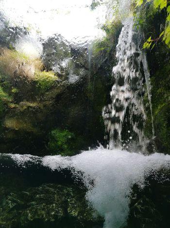 Japan Kyoto Aquarium Rain Cascade Pluie D'été