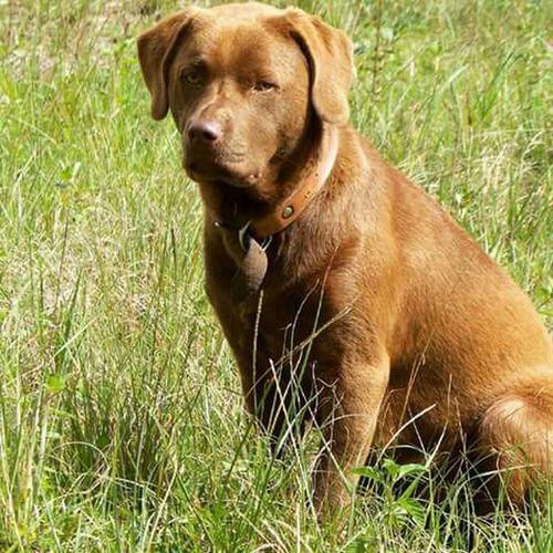 Dog Love Dog