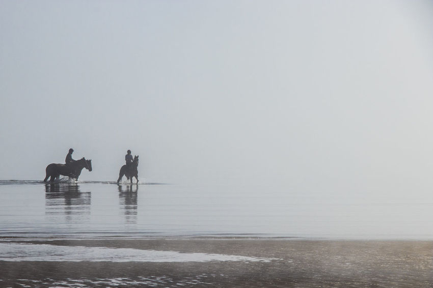 Horses Bayside Early Morning Foggy Morning Horse Exercising Horse Riding Riders Workout