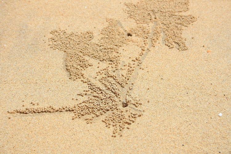 Crab burrows Beach Cancer Cancer Sulcatus Cancer The Crab Crab Crab Burrow Crab Burrows Crabs Krabi Krabi Thailand Pattern Patterns Patterns & Textures Patterns In Nature Patterns In The Sand Radiate Radiating Sand Sand Bubbler Crab Sand Pattern Sand Patterns Sand Pellets Sand Sculpture Sand Sculptures Scopimera