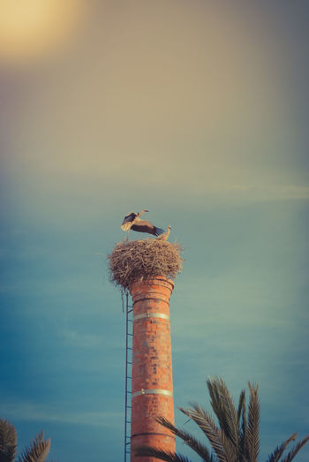 Bird Perching On Chimney Against Sky