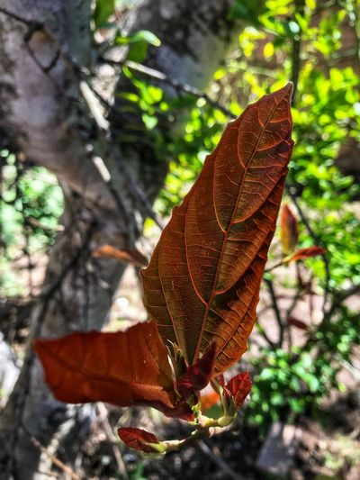 EyeEm Best Shots EyeEm Gallery Eye4photography  EyeEm Nature Lover Plant Leaf Plant Part Nature Close-up Focus On Foreground Day Tree Beauty In Nature No People Vulnerability  Sunlight Outdoors Autumn Branch Fragility Growth Leaf Vein Change Natural Pattern