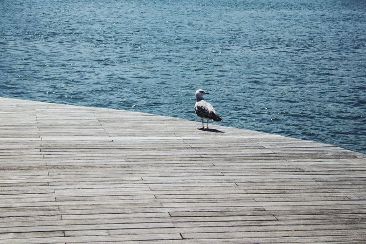 Seagull perching on pier by sea