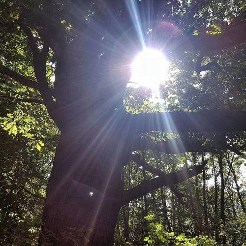 Sunbeam Lens