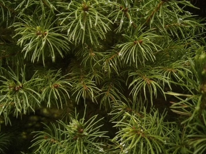 Beauty In Nature Botany Branch Close-up Coniferous Tree Day Full Frame Green Color Growth High Angle View Land Leaf Nature No People Outdoors Palm Leaf Pine Tree Plant Plant Part Tranquility Tree