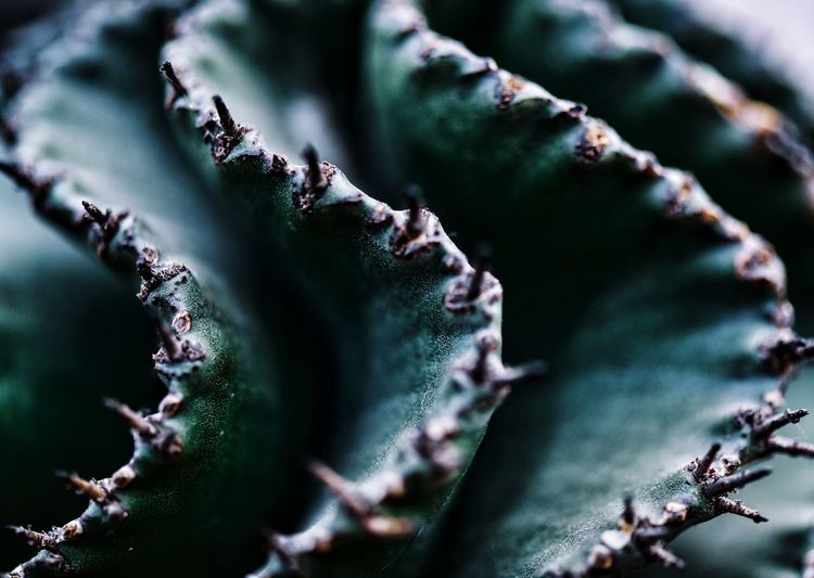 Macro shot of spiked plant growing outdoors